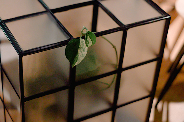Closeup of stacked translucent cubes with black joins. A plant is growing inside and two leaves poke from an opening in the top.