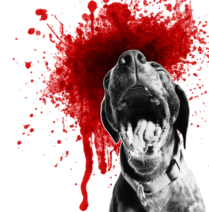 Against a white background, a black and white image of a yawning dog is juxtaposed by a vivid red blood spatter.